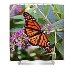 Monarch Butterfly 2 Shower Curtain