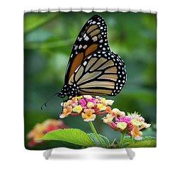 Monarch Butterfly Art II Shower Curtain
