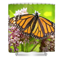 Shower Curtain featuring the photograph Monarch Butterfly Closeup  by Ricky L Jones