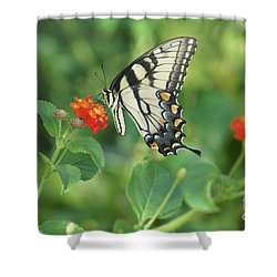Shower Curtain featuring the painting Monarch Butterfly by Debra Crank