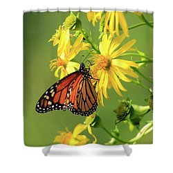 Monarch Butterfly Shower Curtain by Gary Hall