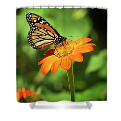 Monarch Butterfly II Vertical Shower Curtain
