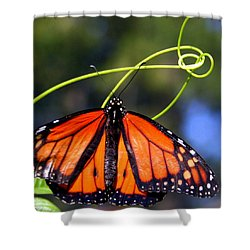 Shower Curtain featuring the photograph Monarch Butterfly by Laurel Talabere