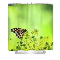 Shower Curtain featuring the photograph Monarch Butterfly by Lori Coleman
