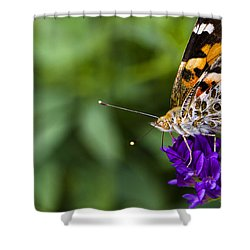 Monarch Butterfly Shower Curtain by Marlo Horne