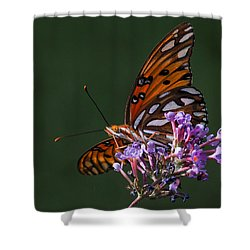 Monarch Butterfly On A Butterfly Bush Shower Curtain