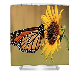 Shower Curtain featuring the photograph Monarch Butterfly On Sun Flower by Sheila Brown