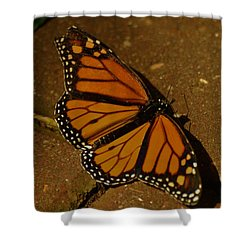 Shower Curtain featuring the photograph Monarch Butterfly by Ramona Whiteaker