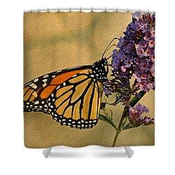 Monarch Butterfly Shower Curtain by Sandy Keeton