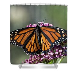 Shower Curtain featuring the photograph Monarch Butterfly by Stephen Flint