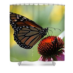 Monarch Butterfly Stony Brook New York Shower Curtain by Bob Savage