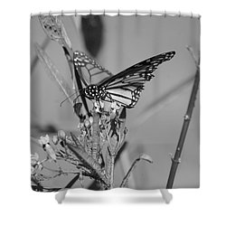 Monarch - Bw Shower Curtain