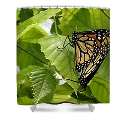 Monarch Duo Shower Curtain