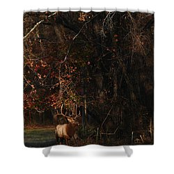 Shower Curtain featuring the photograph Monarch Joins The Rut by Michael Dougherty