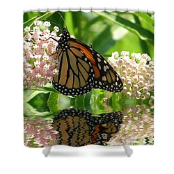 Monarch Lunch Shower Curtain by Rick Friedle