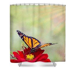 Monarch Magic Shower Curtain