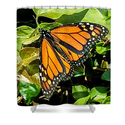 Monarch Shower Curtain by Mark Barclay