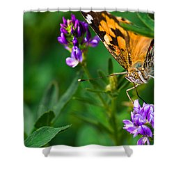 Monarch Shower Curtain by Marlo Horne