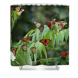 Monarch Migration Shower Curtain