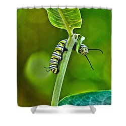 Monarch Munchies Shower Curtain