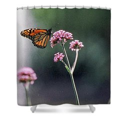 Monarch No. 7-1 Shower Curtain