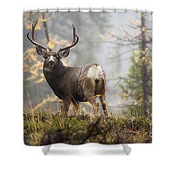 Monarch Of The Mountain Shower Curtain