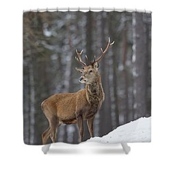 Monarch Of The Woods Shower Curtain