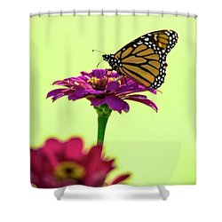 Monarch On A Zinnia Shower Curtain by Shelly Gunderson