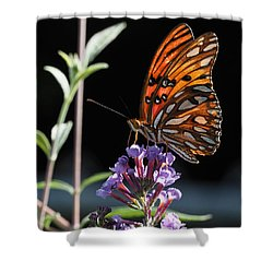 Monarch On Butterfly Bush Shower Curtain