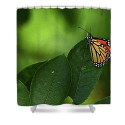 Monarch On Leaf Shower Curtain