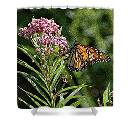 Shower Curtain featuring the photograph Monarch On Milkweed by Sandy Keeton