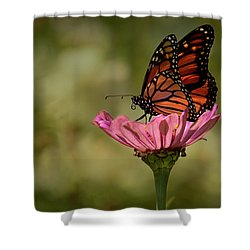 Monarch On Pink Zinnia Shower Curtain