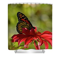 Monarch On Red Zinnia Shower Curtain