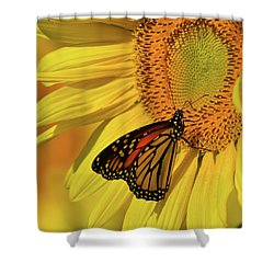 Monarch On Sunflower Shower Curtain