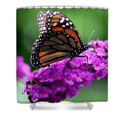 Monarch Purple Shower Curtain Bill Murray Artist