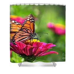 Monarch Visiting Zinnia Shower Curtain