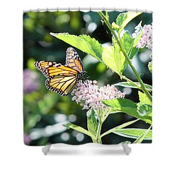 Monarch1 Shower Curtain