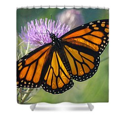 Monarch's Beauty Shower Curtain