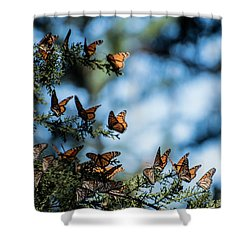 Monarchs In The Tree Shower Curtain