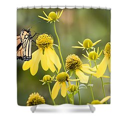 Monarchs Of Wisconsin Shower Curtain by Ricky L Jones