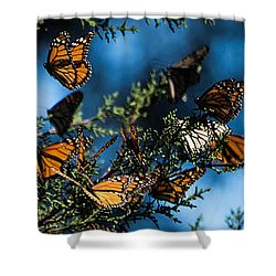 Monarchs Shower Curtain