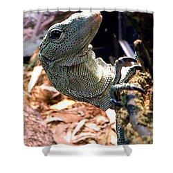 Monitor Lizard 002 Shower Curtain