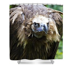 Monk Vulture 3 Shower Curtain