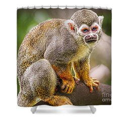Shower Curtain featuring the photograph Monkey Business by Judy Kay