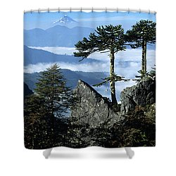 Monkey Puzzle Trees In Huerquehue National Park Shower Curtain by James Brunker