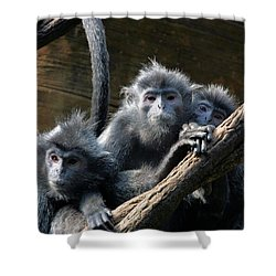 Monkey Trio Shower Curtain by Karol Livote