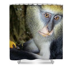 Monkey With His Mango Shower Curtain