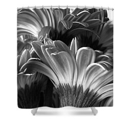 Monochrome Gerbera Daisies Square Shower Curtain