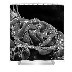 Shower Curtain featuring the photograph Monochrome Rose After Rain by Leif Sohlman