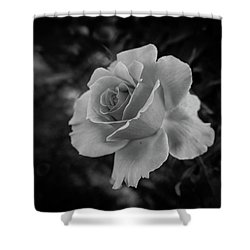 Monochrome Rose Macro Shower Curtain